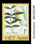 Small photo of VIETNAM - CIRCA 1986: A stamp printed in Vietnam shows Amentotaxus yunnanensis, series is devoted to endangered species of flora, circa 1986