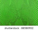 Green Python Snake Skin Textur...