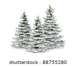 Christmas Trees With Snow...