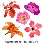 tropic flowers vector. hawaiian ...
