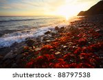 Small photo of Sea rocky coast with red algae (Rhodophyta) at sunset light