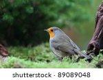 robin in a garden searching for ...   Shutterstock . vector #89089048