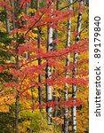 landscape of autumn woodland... | Shutterstock . vector #89179840
