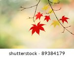 Japan leaves - stock photo