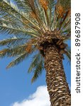 date palm against the blue sky | Shutterstock . vector #89687908