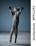 Little Kitten Jumping With...