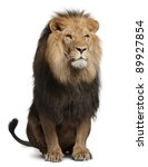 Stock photo lion panthera leo years old sitting in front of white background 89927854