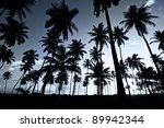 palm trees at night | Shutterstock . vector #89942344