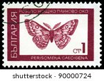 Small photo of BULGARIA - CIRCA 1968: A stamp printed by Bulgaria shows butterfly Saturnid moth (Perisomena Caecigena. L), series beetle, circa 1968
