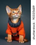 Stock photo kitten abyssinian age month 90335689