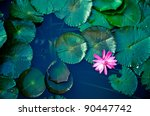 Water Lily Lotus Flower And...