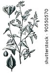 Small photo of Knotweed, knotgrass, bistort, tear-thumb, mile-a-minute, ars-smerte - Poligonum fugopyrum - an illustration of the encyclopedia publishers Education, St. Petersburg, Russian Empire, 1896