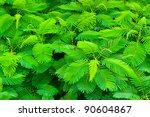 top view of tropical forest... | Shutterstock . vector #90604867