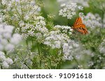 Anthriscus Sylvestris  Known A...