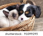 Stock photo spanie puppy and kitten 91099295