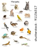 Collage Of Pets And Animals In...