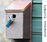 A Blue Tit Inspects Its New...