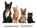 Stock photo group of cats and dogs sitting in front of white background 91233317