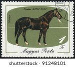 Small photo of MAGYAR- CIRCA 1985: A stamp printed in MAGYAR shows a Black Nonius (Equus caballus) standing on a green background. Nonius XXXVI 1883, horses series, circa 1985