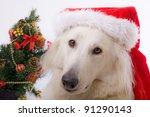 White Swiss Shepherd Dog With ...