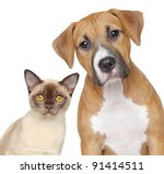 Burmese Cat And Staffordshire...