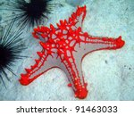 Horned Sea Star  Nungwi ...