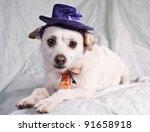 chihuahua in halloween costume | Shutterstock . vector #91658918