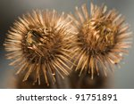 arctium lappa | Shutterstock . vector #91751891