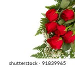Six beautiful red roses isolated on a white background with room for your text - stock photo