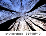 Dry Trees Silhouettes  Pointin...