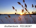 Tall Grass By The Frozen Lake...