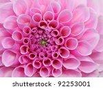 Pink Flower In Very High Detai...