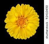 Yellow Dahlia Flower With...
