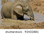 Elephant Having A Cool Mud Bat...