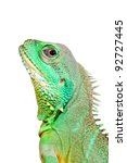 Colorful Green Lizard Close Up...