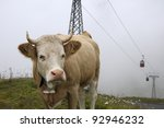 cow with bell in bernese... | Shutterstock . vector #92946232