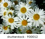daisy background | Shutterstock . vector #930012