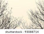 Bare Branches Against The Sky...