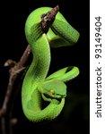 Постер, плакат: Ekiiwhagahmg snakes snakes green