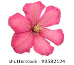 Pink Flower Isolated On White...