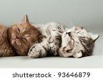 two fluffy gray beautiful... | Shutterstock . vector #93646879