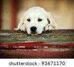 Stock photo peek a boo 93671170