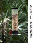 Small photo of Cardinals or Cardinalidae feeding at a bird feeder