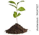 coffee plant tree growing... | Shutterstock . vector #94147327