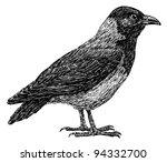 crow | Shutterstock . vector #94332700