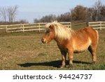 Miniature Horse