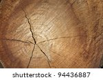 Freshly Cut Pine Log Showing...