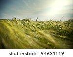 wheat | Shutterstock . vector #94631119