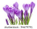 Spring Flowers  Crocus ...