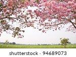 tabebuia flower pink trumpet ... | Shutterstock . vector #94689073